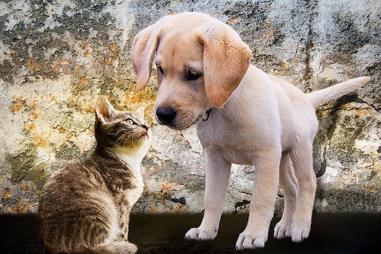 Pets cuidados necessário
